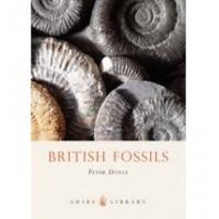 British Fossils - Shopping De Panne